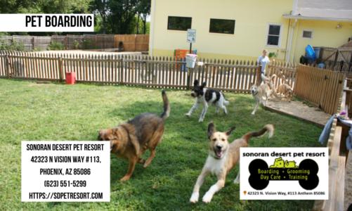 Pet Boarding – Sonoran Desert Pet Resort – Call us at (623) 551-5299